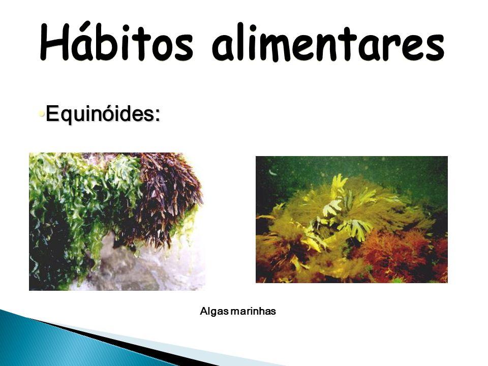 Ofiuróides: Crustáceos Moluscos