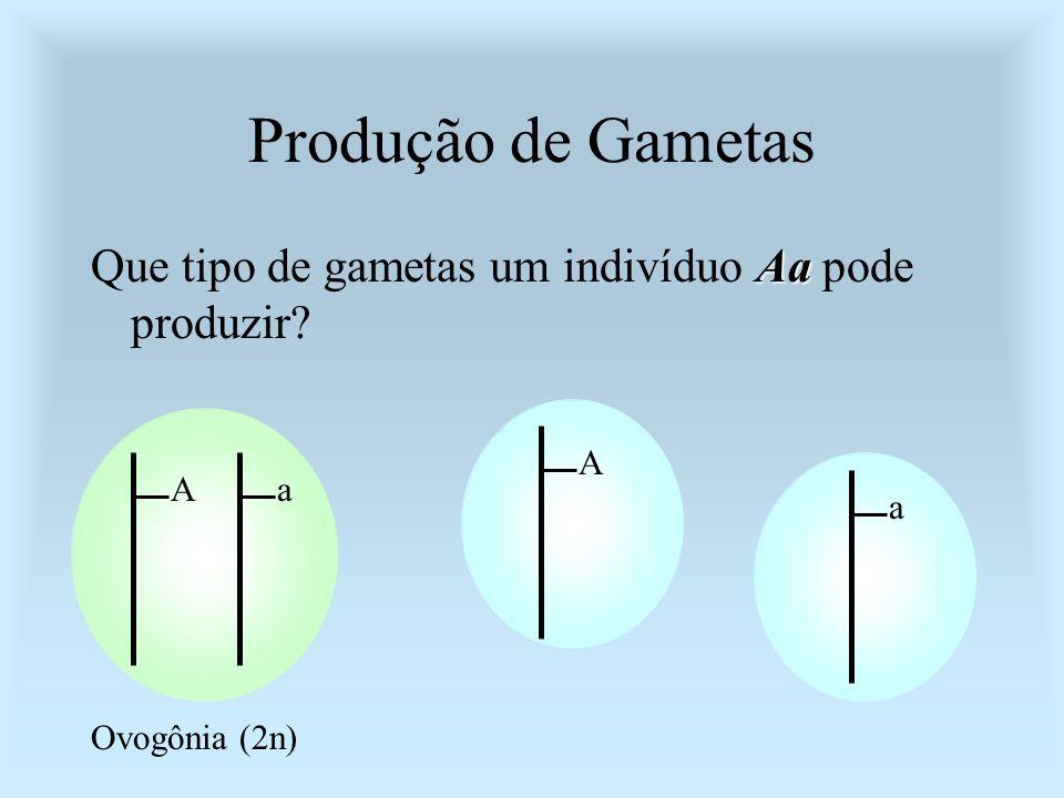Produção de Gametas Aa Que tipo de gametas um indivíduo Aa pode produzir? Aa Ovogônia (2n) A a