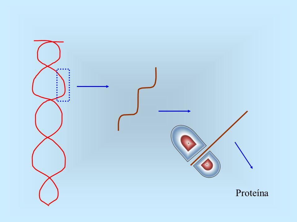 DOMINÂNCIA INCOMPLETA O corre quando o fenótipo dos indivíduos heterozigóticos é intermediário entre os fenótipos dos dois homozigóticos.