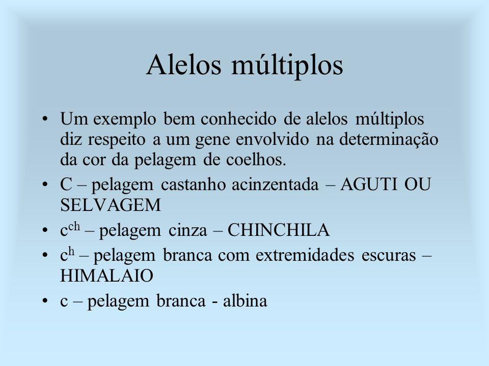 Alelos múltiplos Um exemplo bem conhecido de alelos múltiplos diz respeito a um gene envolvido na determinação da cor da pelagem de coelhos. C – pelag