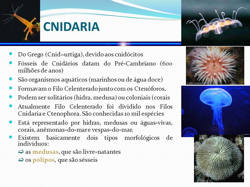 FILO CNIDARIA Do Grego (Cnid=urtiga), devido aos cnidócitos Fósseis de Cnidários datam do Pré-Cambriano (600 milhões de anos) São organismos aquáticos
