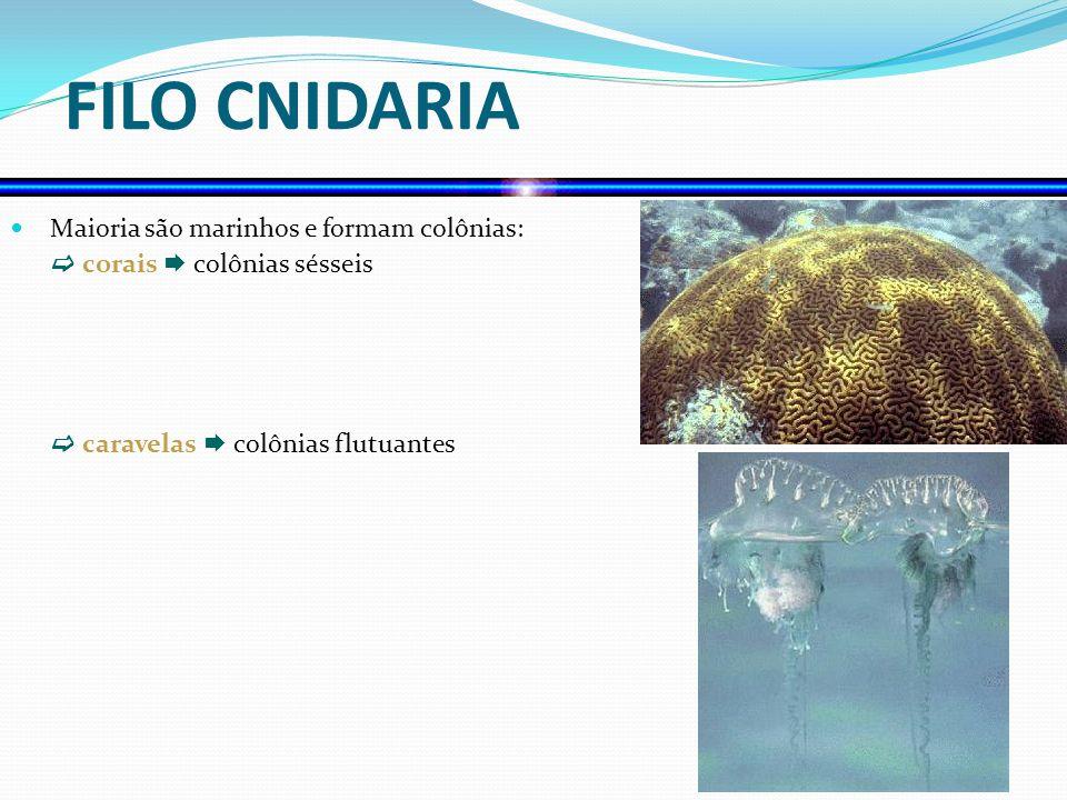 Classe Hydrozoa Caravela- portuguesa