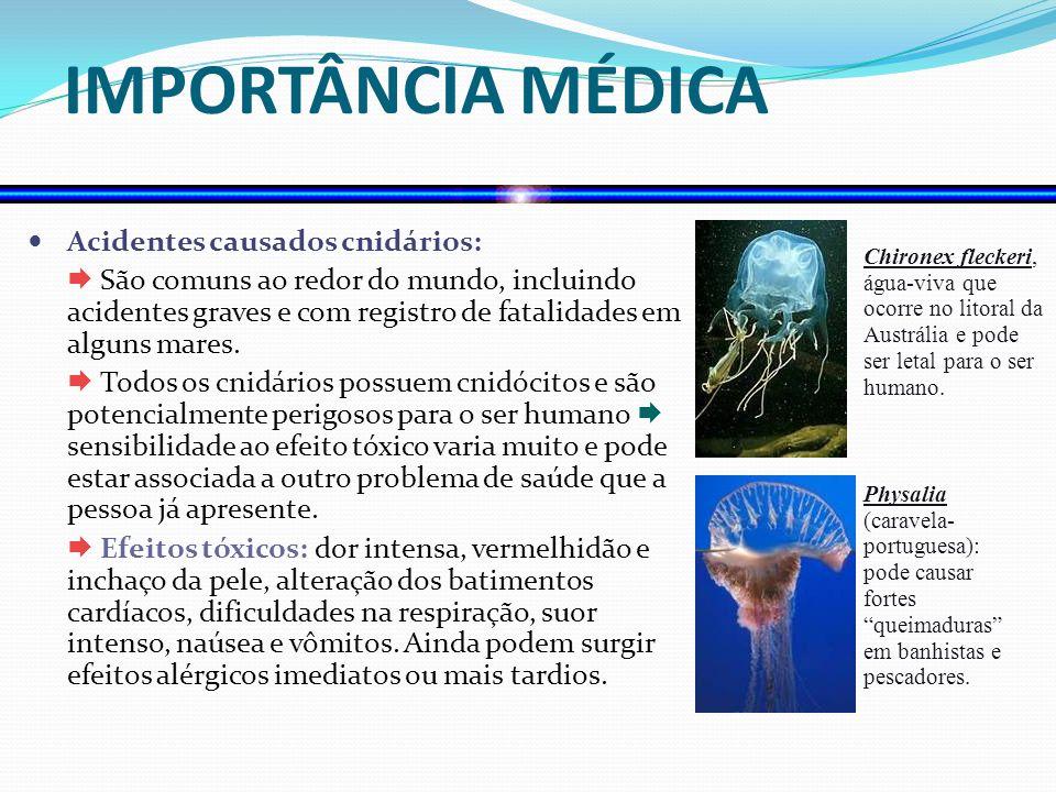 IMPORTÂNCIA MÉDICA Acidentes causados cnidários: São comuns ao redor do mundo, incluindo acidentes graves e com registro de fatalidades em alguns mare