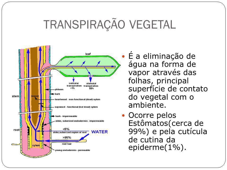 TRANSPIRAÇÃO VEGETAL É a eliminação de água na forma de vapor através das folhas, principal superfície de contato do vegetal com o ambiente. Ocorre pe