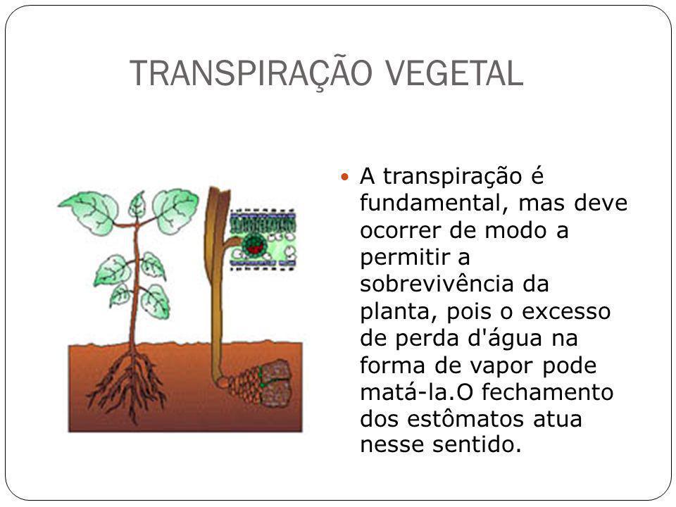 TRANSPIRAÇÃO VEGETAL A transpiração é fundamental, mas deve ocorrer de modo a permitir a sobrevivência da planta, pois o excesso de perda d'água na fo
