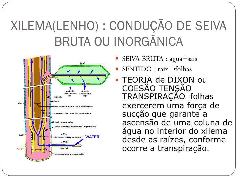 XILEMA(LENHO) : CONDUÇÃO DE SEIVA BRUTA OU INORGÂNICA SEIVA BRUTA : água+sais SENTIDO : raiz folhas TEORIA de DIXON ou COESÃO TENSÃO TRANSPIRAÇÃO : fo