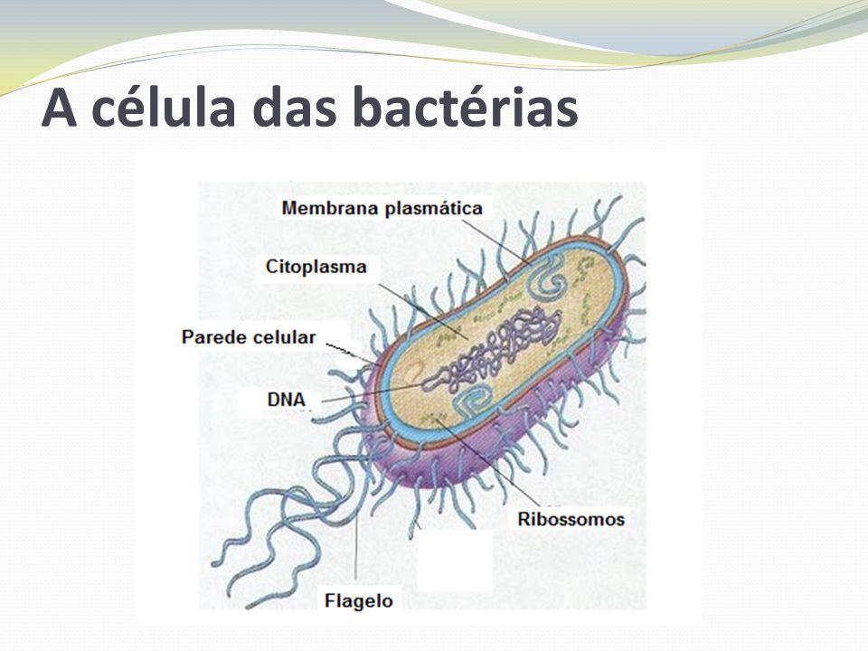 O formato das bactérias As bactérias são classificadas de acordo com a sua forma.