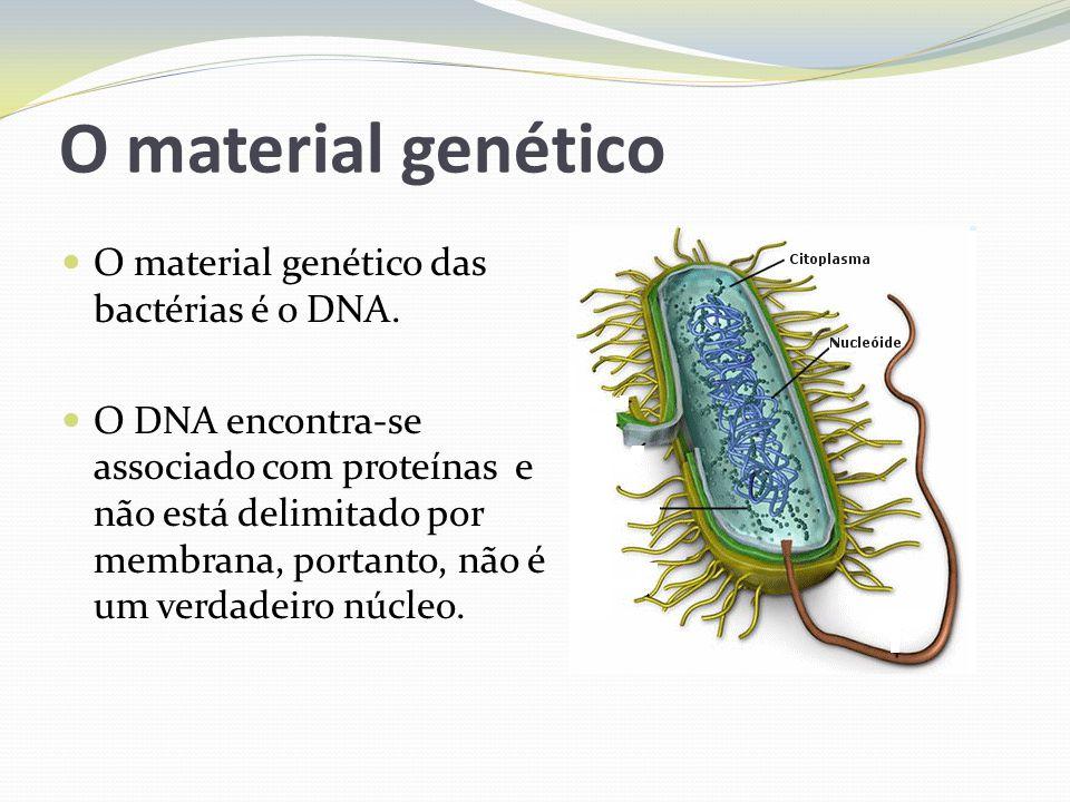 Nutrição das bactérias A maioria das bactérias se alimentam de substâncias orgânicas no meio ambiente, portanto são heterotróficas.