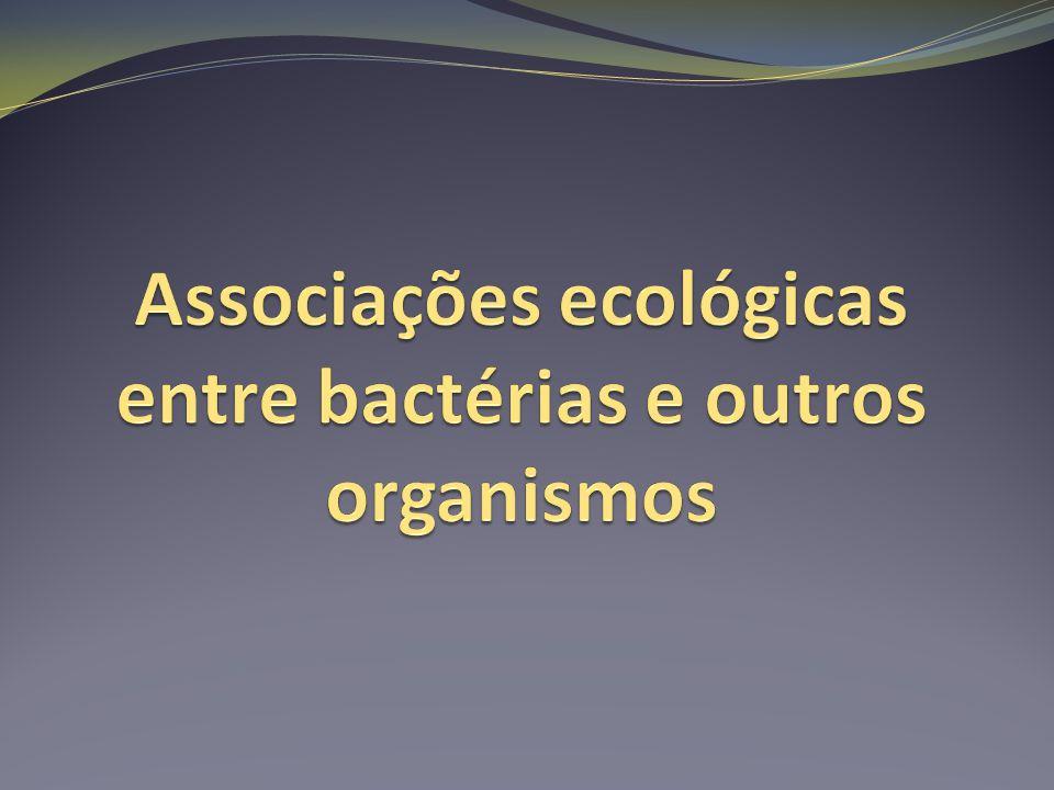 Liquens Associações entre bactérias e fungos trazem benefícios aos dois.