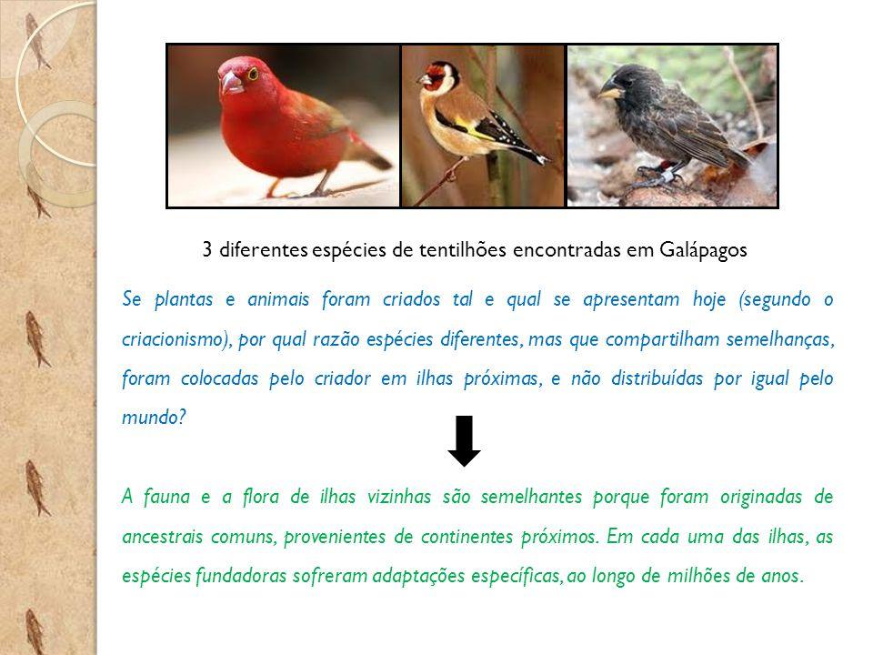 3 diferentes espécies de tentilhões encontradas em Galápagos Se plantas e animais foram criados tal e qual se apresentam hoje (segundo o criacionismo)
