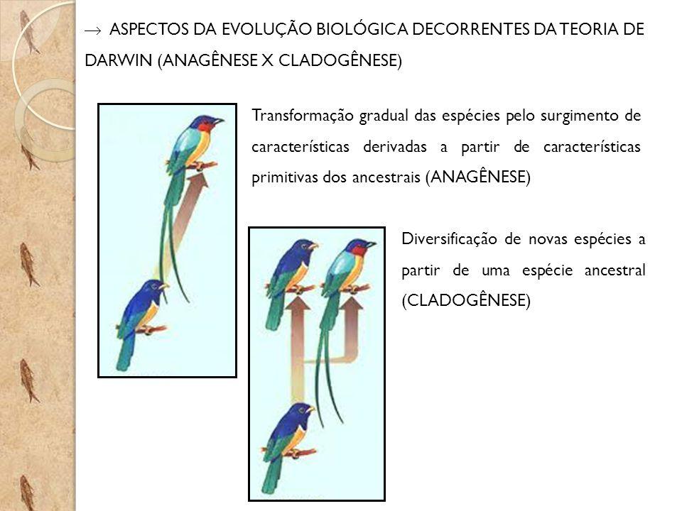 ASPECTOS DA EVOLUÇÃO BIOLÓGICA DECORRENTES DA TEORIA DE DARWIN (ANAGÊNESE X CLADOGÊNESE) Transformação gradual das espécies pelo surgimento de características derivadas a partir de características primitivas dos ancestrais (ANAGÊNESE) Diversificação de novas espécies a partir de uma espécie ancestral (CLADOGÊNESE)
