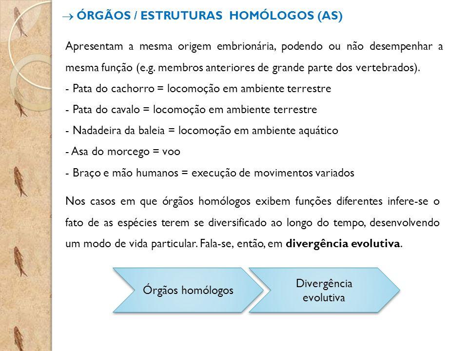 ÓRGÃOS / ESTRUTURAS HOMÓLOGOS (AS) Apresentam a mesma origem embrionária, podendo ou não desempenhar a mesma função (e.g. membros anteriores de grande