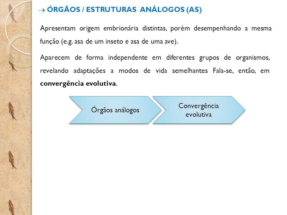 ÓRGÃOS / ESTRUTURAS ANÁLOGOS (AS) Apresentam origem embrionária distintas, porém desempenhando a mesma função (e.g. asa de um inseto e asa de uma ave)