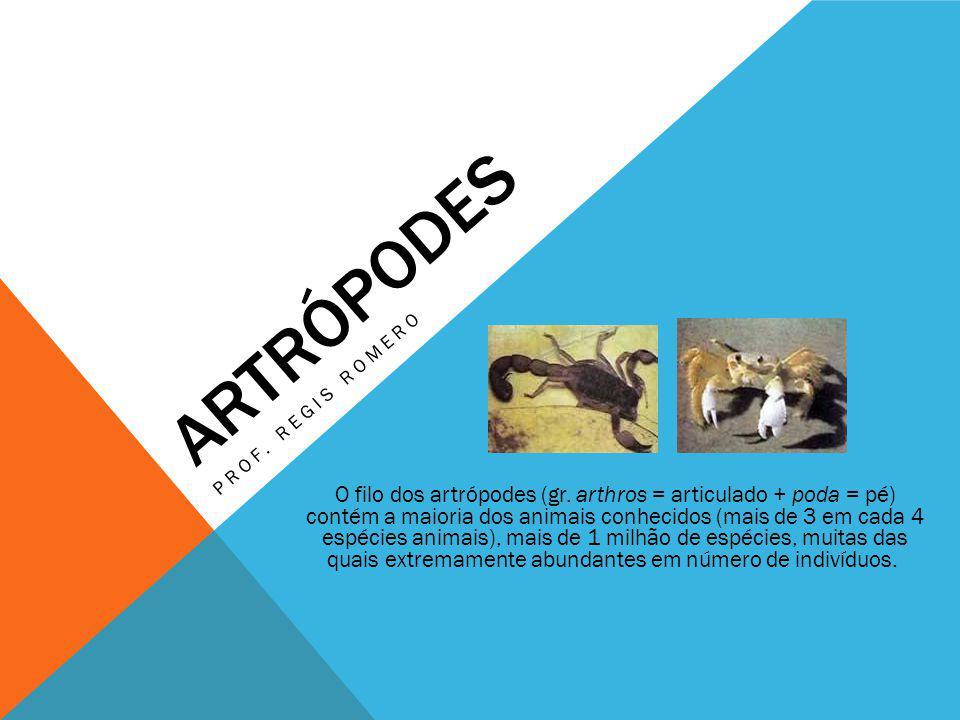 ARTRÓPODES PROF. REGIS ROMERO O filo dos artrópodes (gr. arthros = articulado + poda = pé) contém a maioria dos animais conhecidos (mais de 3 em cada