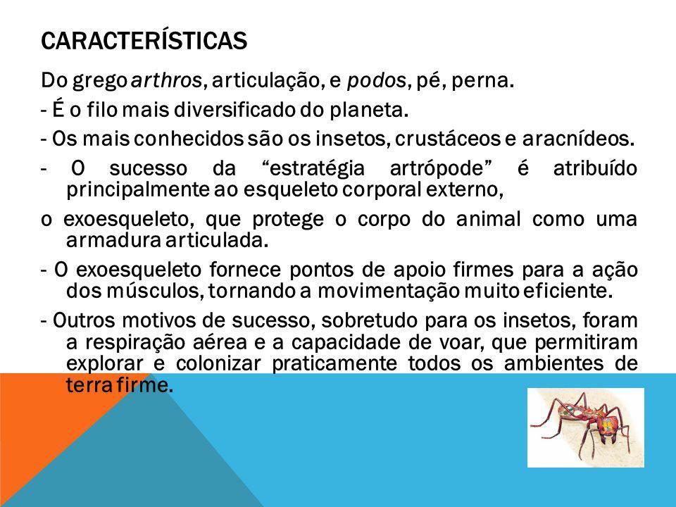 RESPIRAÇÃO Nos artrópodes, podem ser encontrados três tipos diferentes de estruturas respiratórias: As brânquias são típicas das formas que predominam nos ecossistemas aquáticos, os crustáceos.