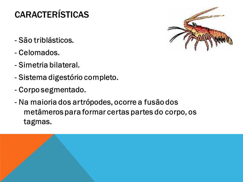 CRUSTÁCEOS Os crustáceos (do latim crusta, crosta) são artrópodos caracterizados principalmente pelo corpo protegido por uma crosta formada pelo espesso exoesqueleto quitinoso (casca de camarão), a qual ainda é frequentemente impregnada de sais calcários (casca de siri).