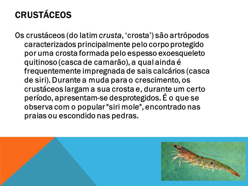 CRUSTÁCEOS Os crustáceos (do latim crusta, crosta) são artrópodos caracterizados principalmente pelo corpo protegido por uma crosta formada pelo espes