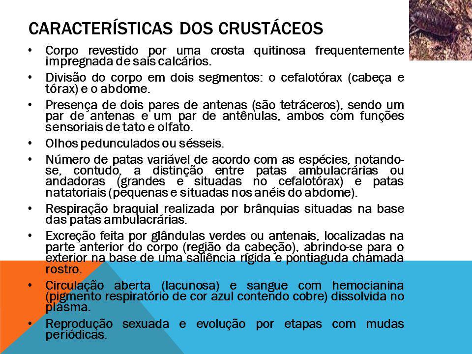 CARACTERÍSTICAS DOS CRUSTÁCEOS Corpo revestido por uma crosta quitinosa frequentemente impregnada de sais calcários. Divisão do corpo em dois segmento