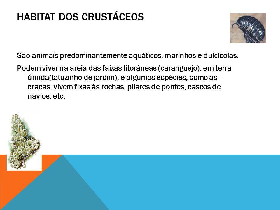 HABITAT DOS CRUSTÁCEOS São animais predominantemente aquáticos, marinhos e dulcícolas. Podem viver na areia das faixas litorâneas (caranguejo), em ter