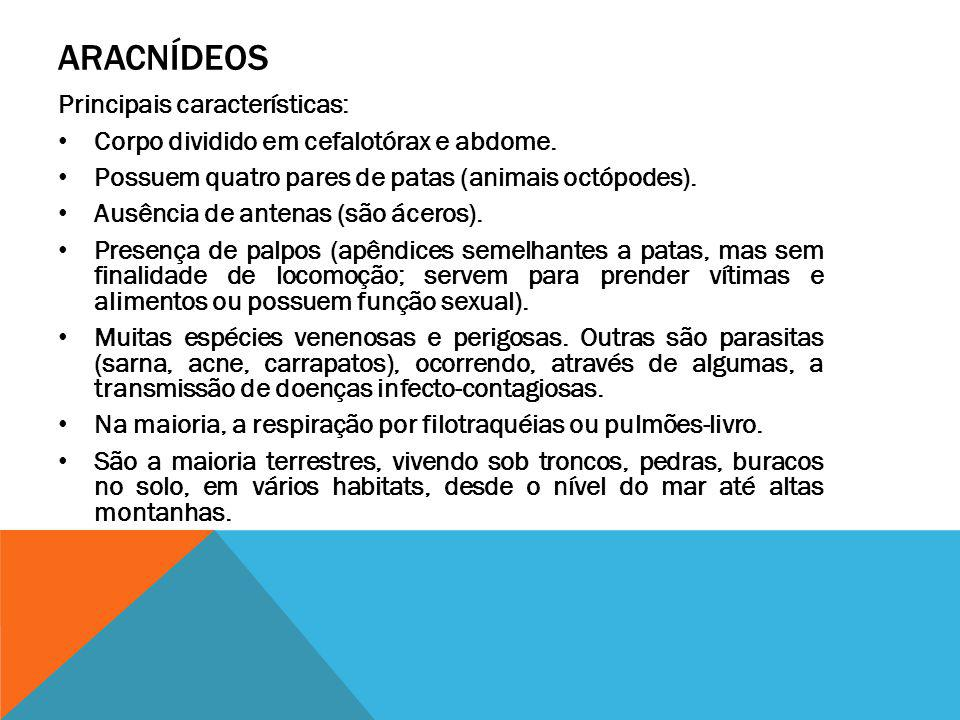 ARACNÍDEOS Principais características: Corpo dividido em cefalotórax e abdome. Possuem quatro pares de patas (animais octópodes). Ausência de antenas