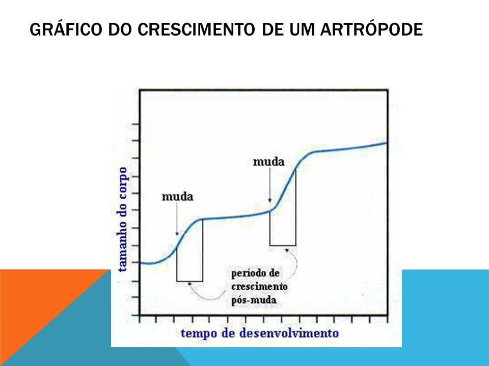 GRÁFICO DO CRESCIMENTO DE UM ARTRÓPODE