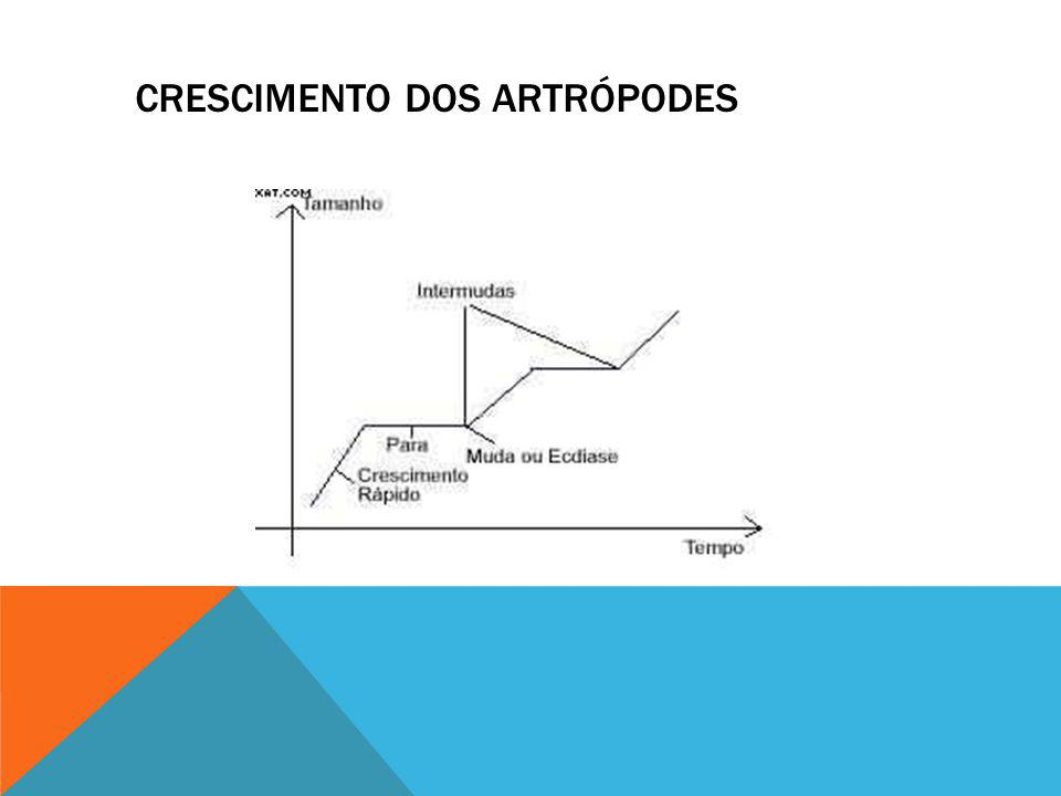 CRESCIMENTO DOS ARTRÓPODES