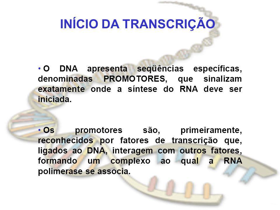 INÍCIO DA TRANSCRIÇÃO O DNA apresenta seqüências específicas, denominadas PROMOTORES, que sinalizam exatamente onde a síntese do RNA deve ser iniciada