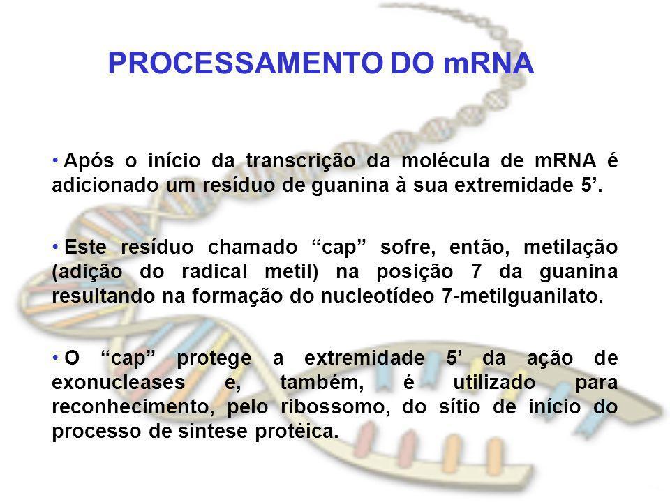 PROCESSAMENTO DO mRNA Após o início da transcrição da molécula de mRNA é adicionado um resíduo de guanina à sua extremidade 5. Este resíduo chamado ca