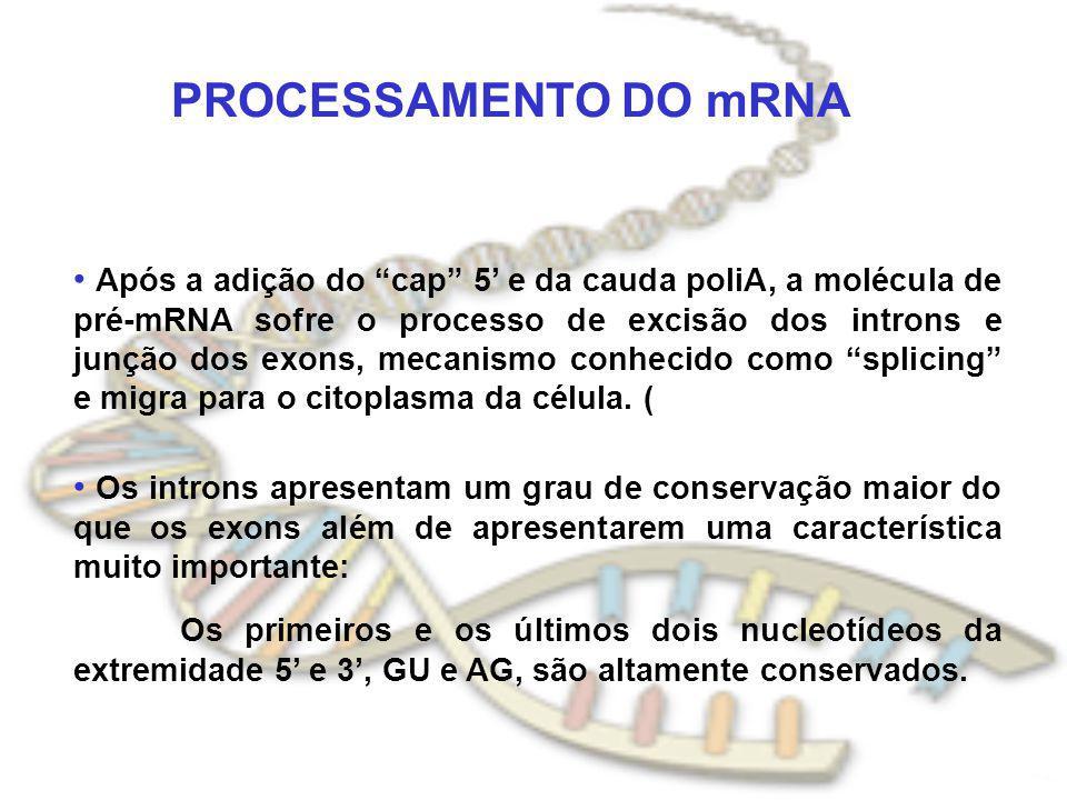 PROCESSAMENTO DO mRNA Após a adição do cap 5 e da cauda poliA, a molécula de pré-mRNA sofre o processo de excisão dos introns e junção dos exons, meca