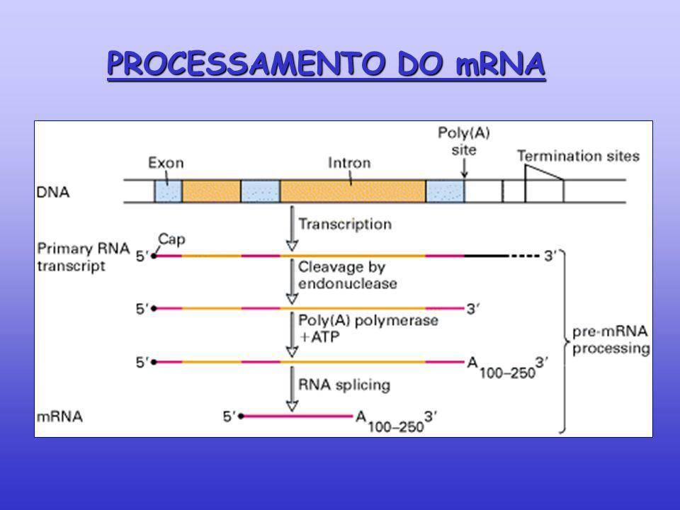 PROCESSAMENTO DO mRNA