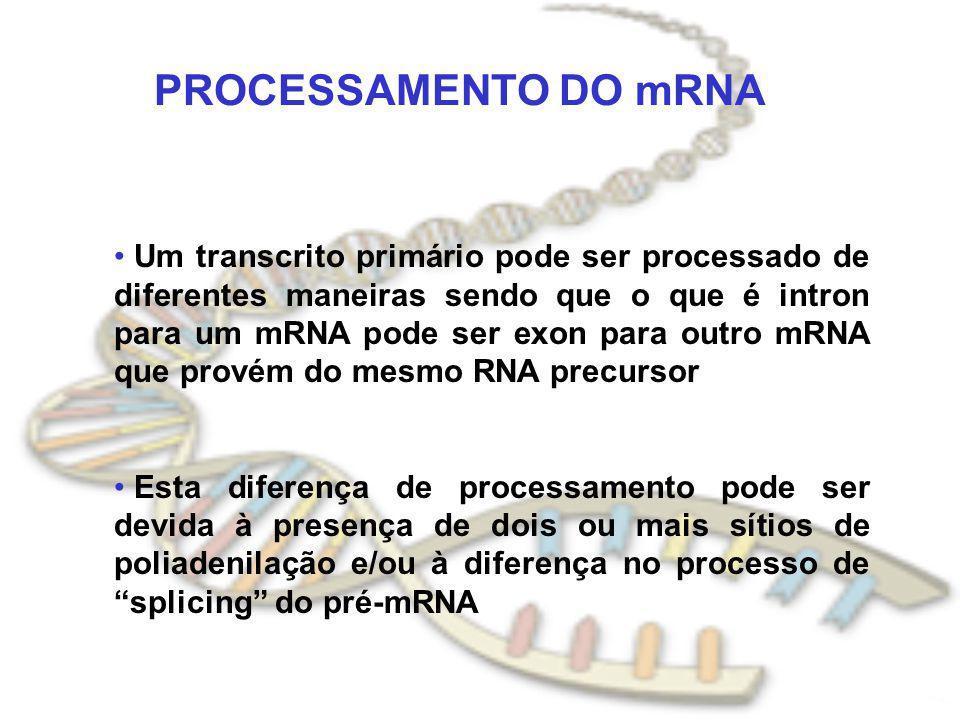 PROCESSAMENTO DO mRNA Um transcrito primário pode ser processado de diferentes maneiras sendo que o que é intron para um mRNA pode ser exon para outro