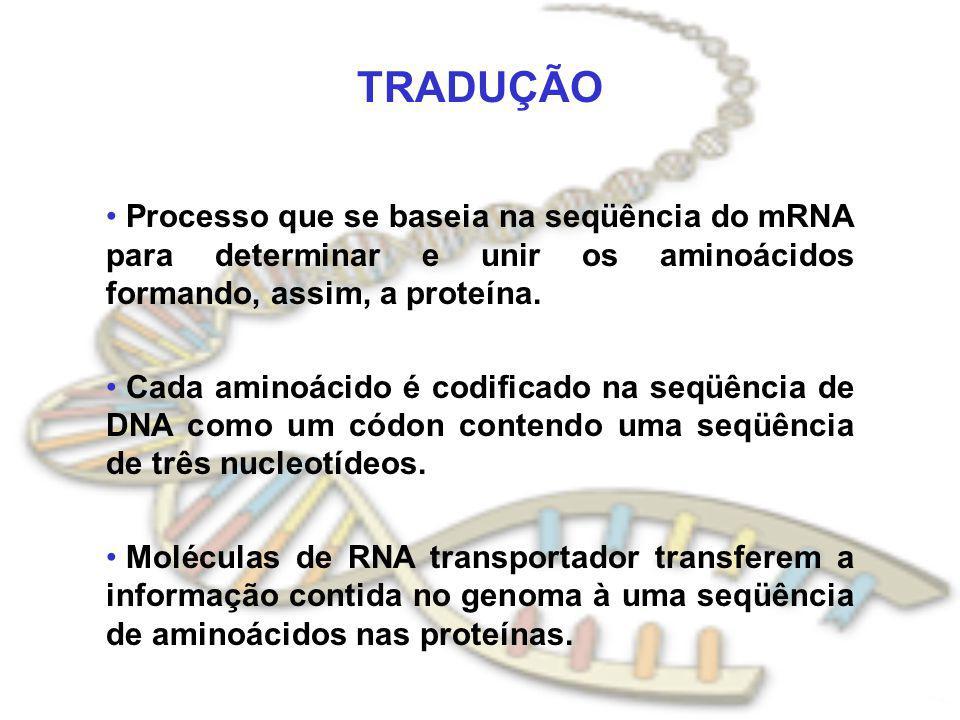 TRADUÇÃO Processo que se baseia na seqüência do mRNA para determinar e unir os aminoácidos formando, assim, a proteína. Cada aminoácido é codificado n