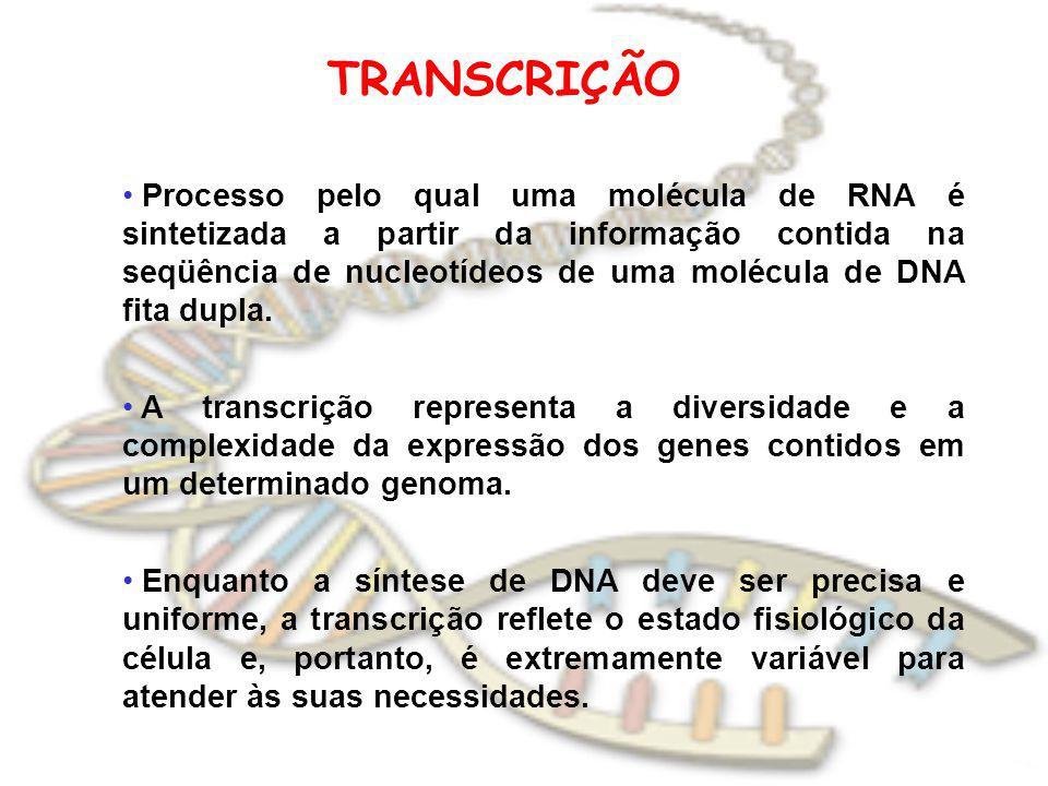 TRANSCRIÇÃO Processo pelo qual uma molécula de RNA é sintetizada a partir da informação contida na seqüência de nucleotídeos de uma molécula de DNA fi