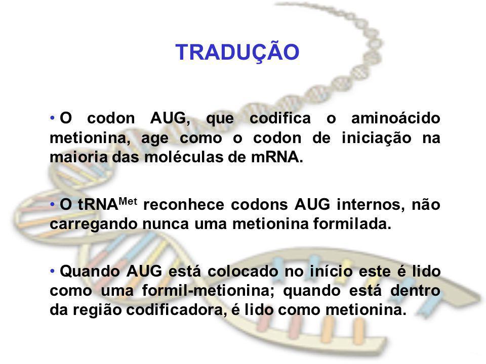 TRADUÇÃO O codon AUG, que codifica o aminoácido metionina, age como o codon de iniciação na maioria das moléculas de mRNA. O tRNA Met reconhece codons