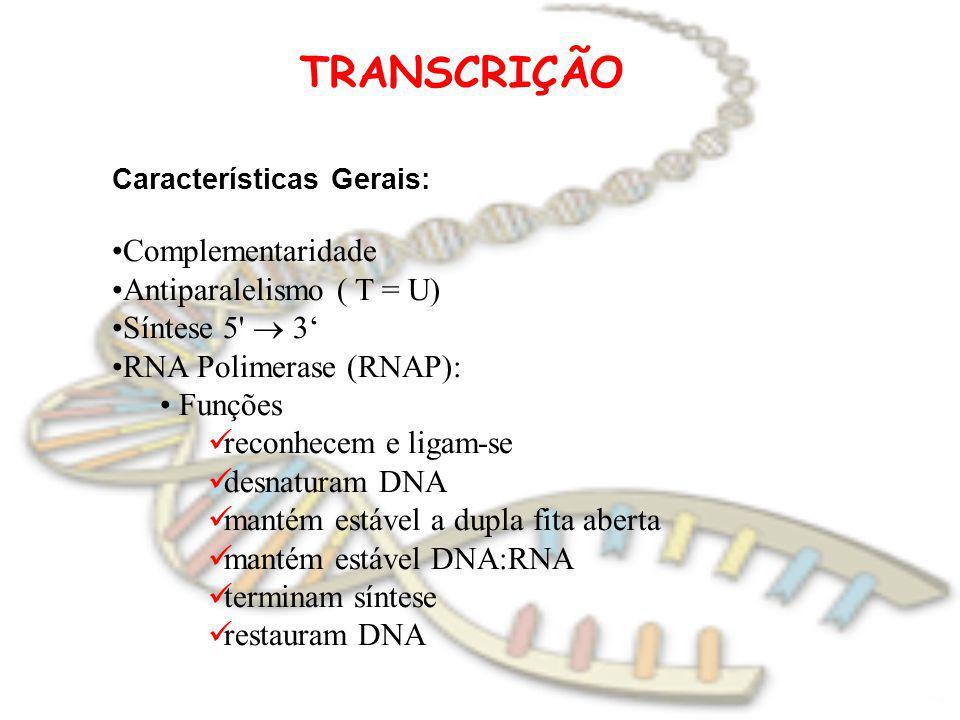 TRANSCRIÇÃO Características Gerais: Complementaridade Antiparalelismo ( T = U) Síntese 5' 3 RNA Polimerase (RNAP): Funções reconhecem e ligam-se desna