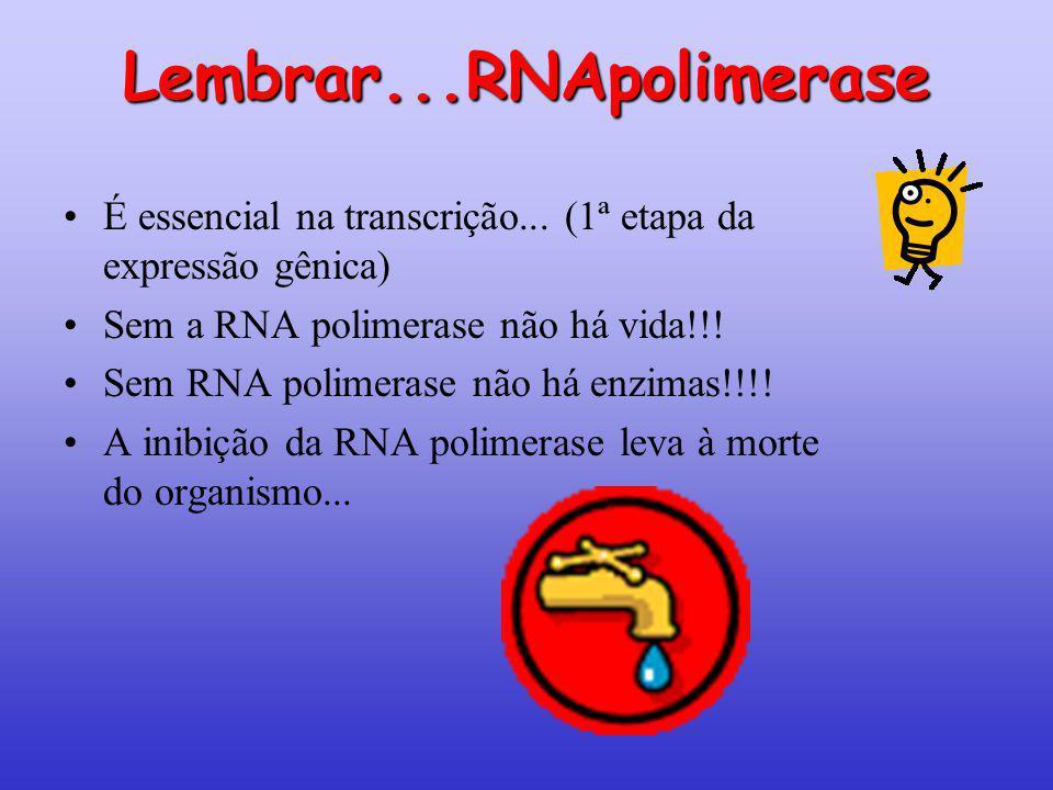 Lembrar...RNApolimerase É essencial na transcrição... (1ª etapa da expressão gênica) Sem a RNA polimerase não há vida!!! Sem RNA polimerase não há enz