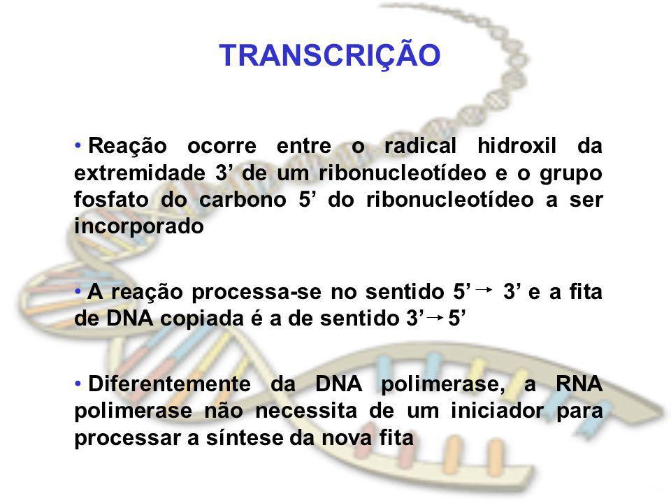 TRANSCRIÇÃO Reação ocorre entre o radical hidroxil da extremidade 3 de um ribonucleotídeo e o grupo fosfato do carbono 5 do ribonucleotídeo a ser inco