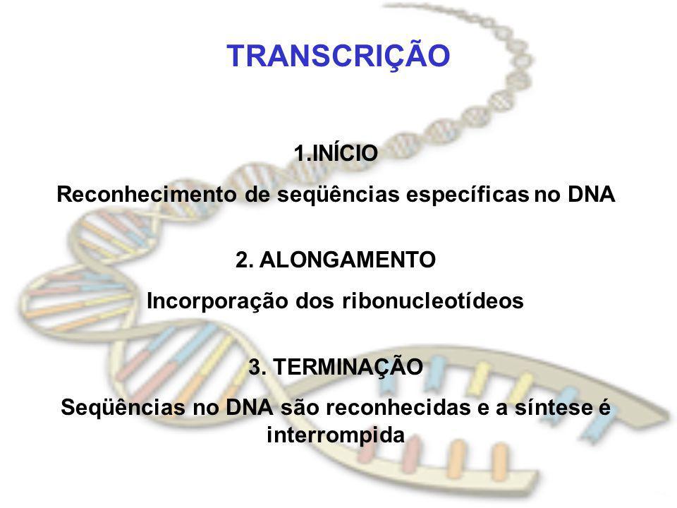 TRANSCRIÇÃO 1.INÍCIO Reconhecimento de seqüências específicas no DNA 2. ALONGAMENTO Incorporação dos ribonucleotídeos 3. TERMINAÇÃO Seqüências no DNA