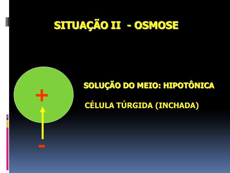 SITUAÇÃO I - OSMOSE SOLUÇÃO DO MEIO: HIPERTÔNICA CÉLULA PLASMOLISADA (MURCHA) - +
