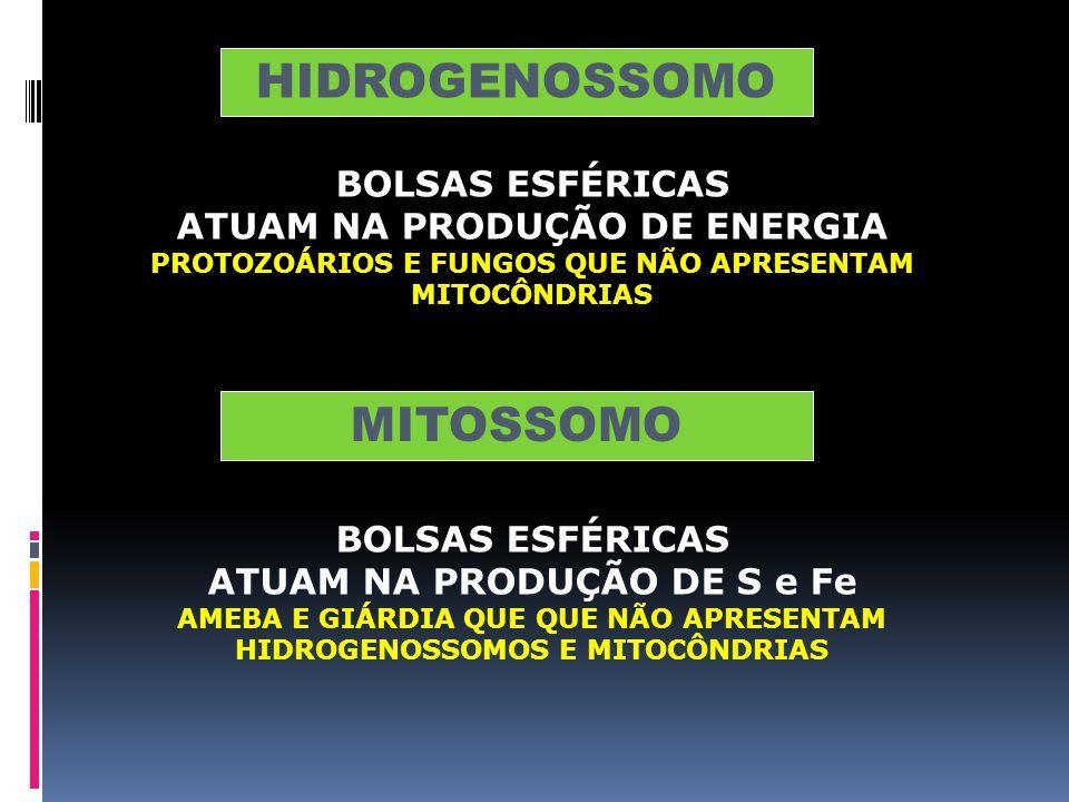 ATUAM NA DESINTOXICAÇÃO CELULAR POSSUEM A ENZIMA CATALASE (DECOMPÕE H 2 0 2 EM H 2 0 E 0 2 ) PRINCIPAL FUNÇÃO OXIDAÇÃO DE ÁCIDOS GRAXOS EM CÉLULAS VEG