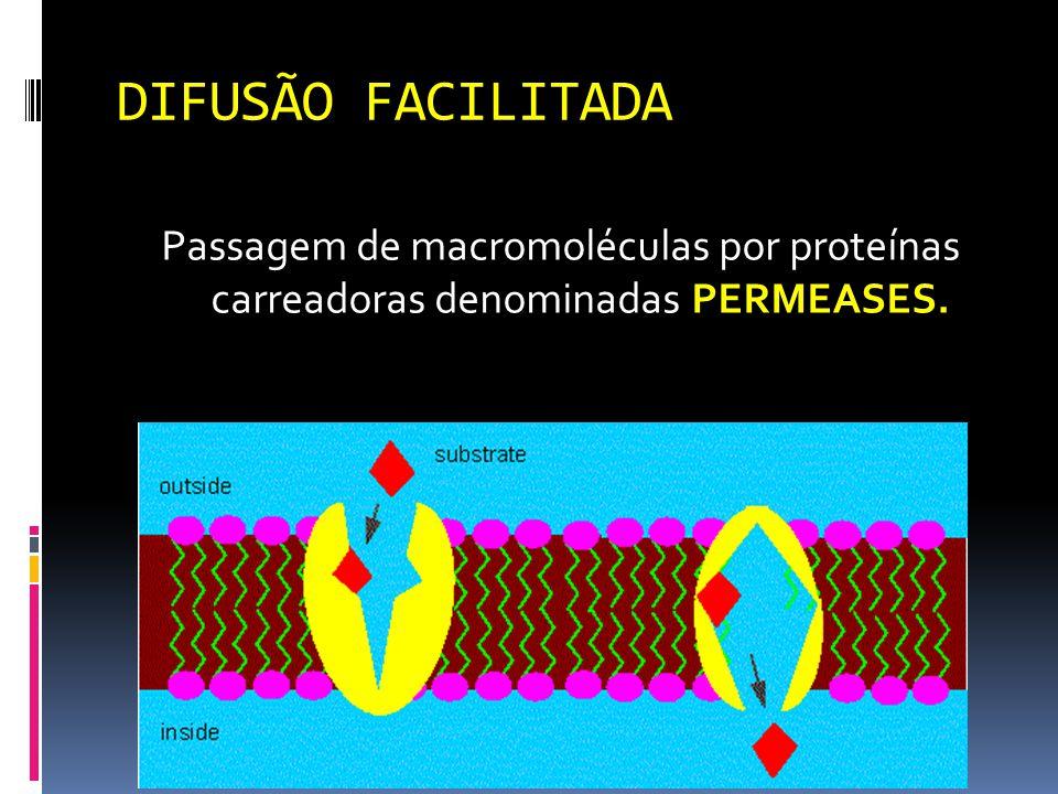 DIFUSÃO FACILITADA Passagem de macromoléculas por proteínas carreadoras denominadas PERMEASES.