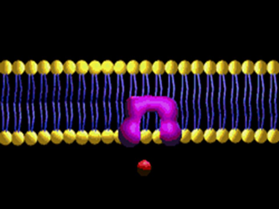 TRANSPORTE ATIVO Ocorre contra o gradiente de concentração com gasto de energia (ATP).
