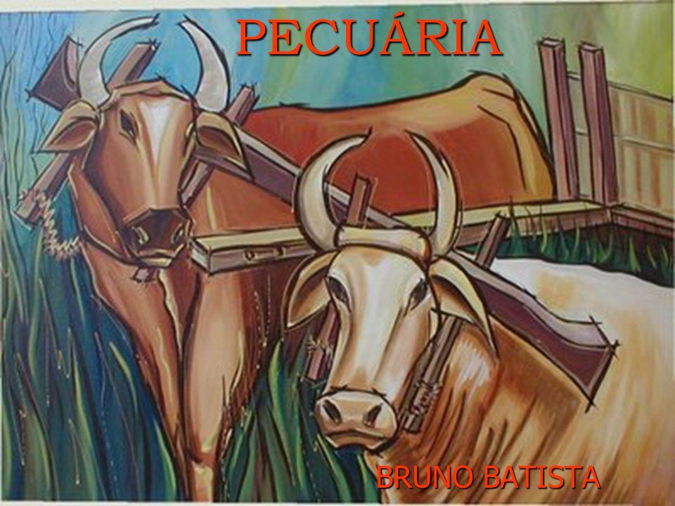 PECUÁRIA PECUÁRIA BRUNO BATISTA