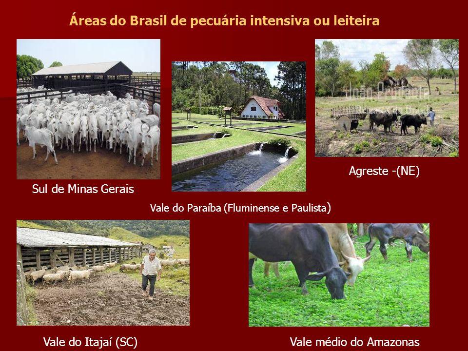 Áreas do Brasil de pecuária intensiva ou leiteira Sul de Minas Gerais Vale do Paraíba (Fluminense e Paulista ) Agreste -(NE) Vale do Itajaí (SC)Vale médio do Amazonas