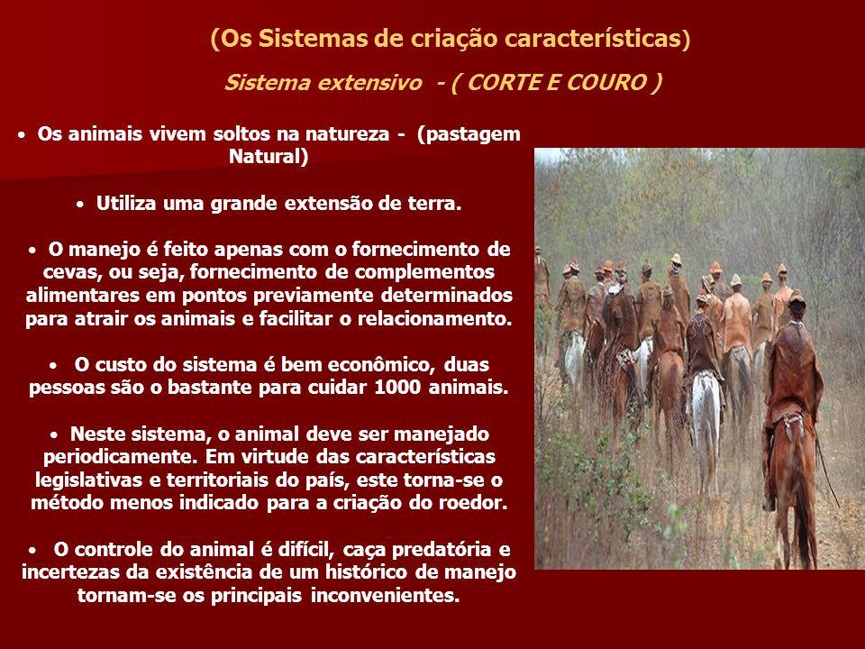 Áreas do Brasil de pecuária extensiva ou de corte Pantanal Matogrossense Oeste Paulista Sertão Nordestino - Campanha GaúchaNorte de Minas Triângulo Mineiro;