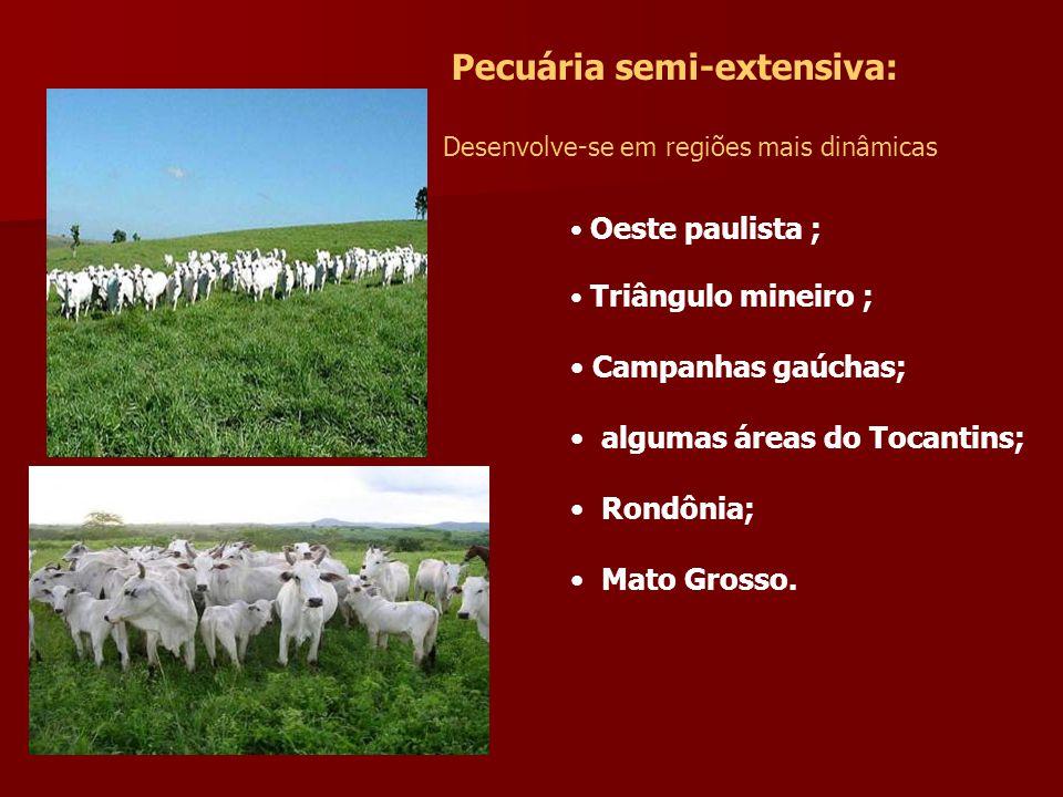 Pecuária semi-extensiva: Desenvolve-se em regiões mais dinâmicas Oeste paulista ; Triângulo mineiro ; Campanhas gaúchas; algumas áreas do Tocantins; Rondônia; Mato Grosso.