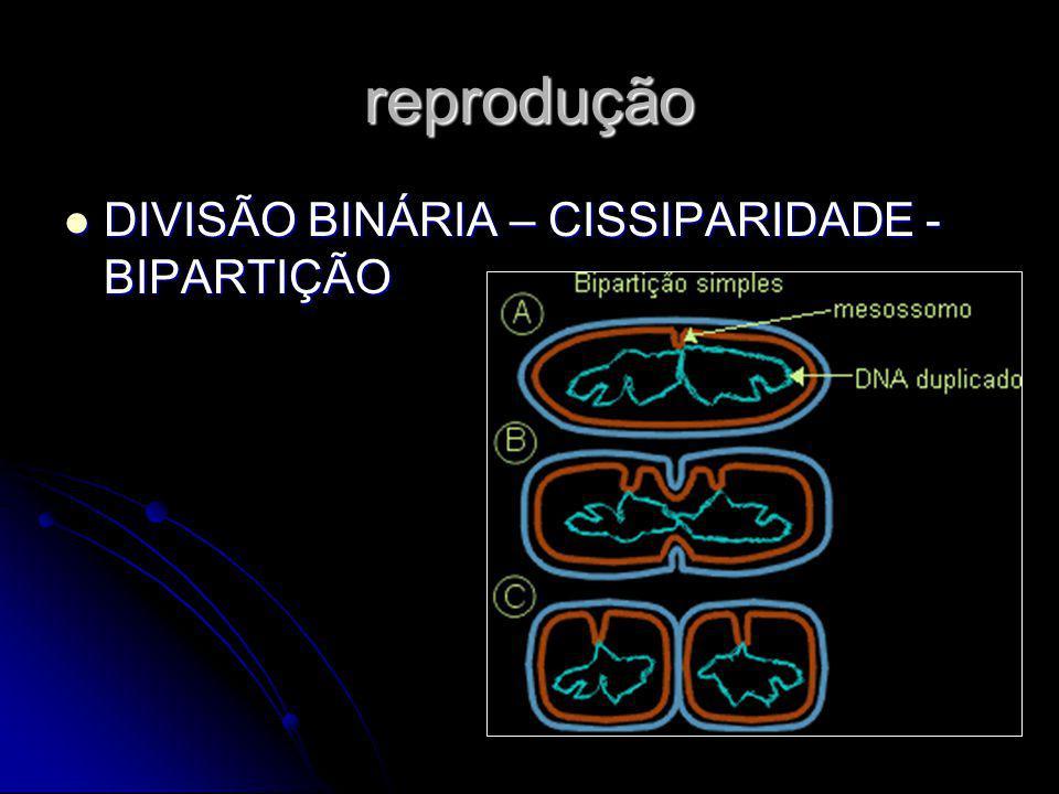 reprodução DIVISÃO BINÁRIA – CISSIPARIDADE - BIPARTIÇÃO DIVISÃO BINÁRIA – CISSIPARIDADE - BIPARTIÇÃO