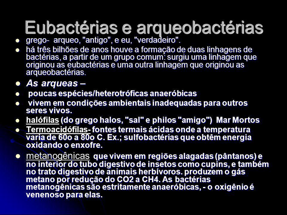 Eubactérias e arqueobactérias grego- arqueo,