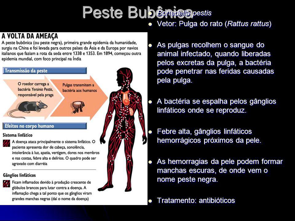 Peste Bubônica Bortedella pestis Bortedella pestis Vetor: Pulga do rato (Rattus rattus) Vetor: Pulga do rato (Rattus rattus) As pulgas recolhem o sang