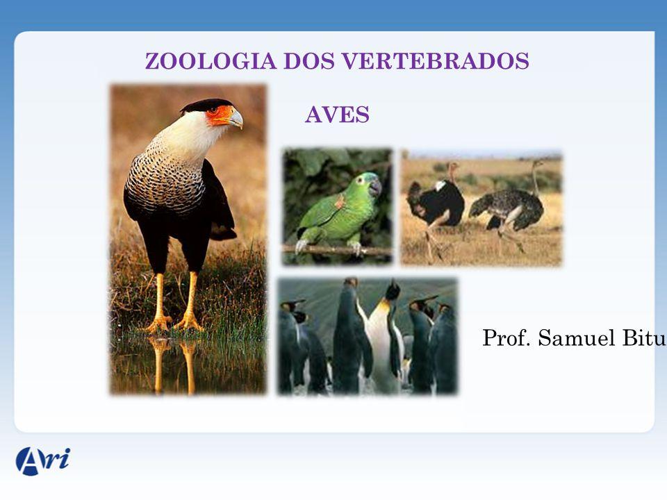 ZOOLOGIA DOS VERTEBRADOS AVES Prof. Samuel Bitu